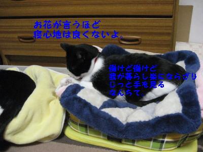 IMG_3005_20081107104940.jpg