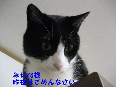 IMG_3013.jpg