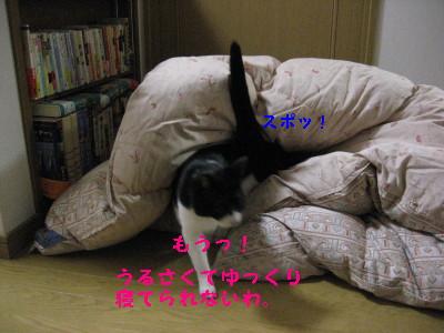 IMG_3055.jpg