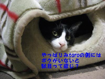 IMG_3240.jpg