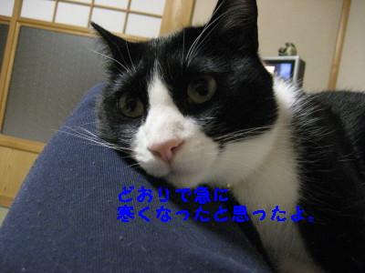 IMG_3289_20081119100152.jpg