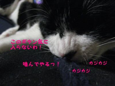 IMG_3302.jpg