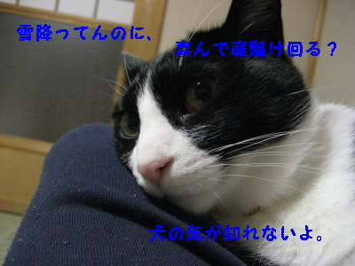 IMG_3303_20081119100207.jpg