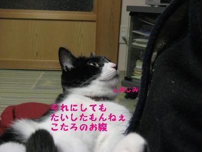 IMG_3431_20081126105923.jpg