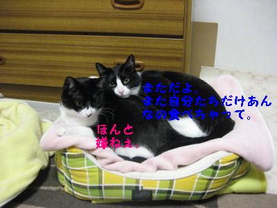 IMG_3454_20081125111223.jpg