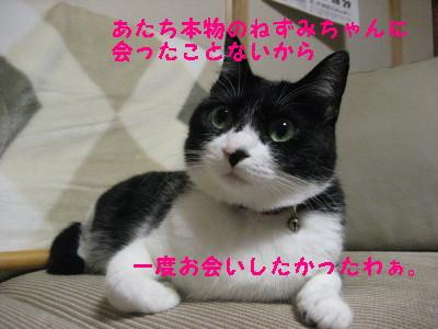 IMG_3498_20081201104520.jpg