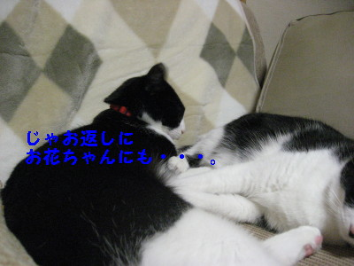IMG_3519.jpg