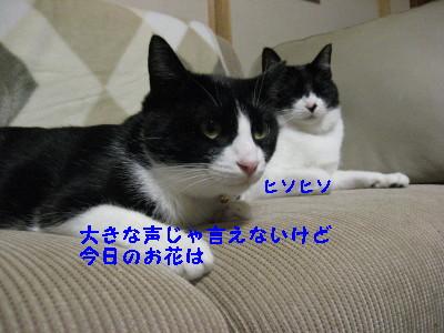 IMG_3537_20081127110230.jpg