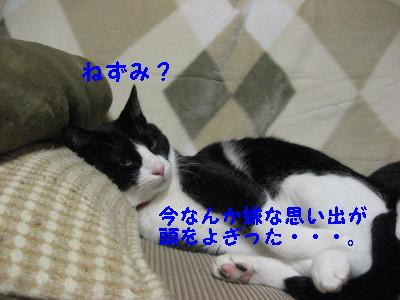IMG_3543_20081201104528.jpg