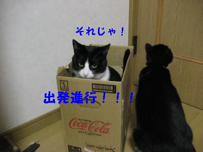 IMG_3560_20081128100529.jpg