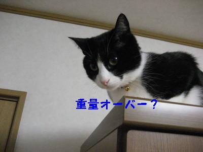 IMG_3584.jpg