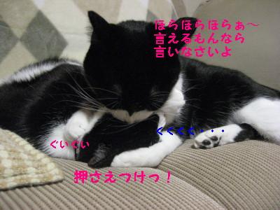 IMG_3787_20081208105203.jpg