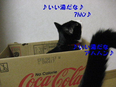 IMG_3839_20081204093451.jpg