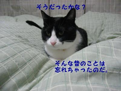 IMG_3946.jpg