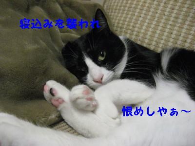 IMG_3977.jpg