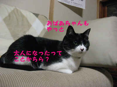 IMG_4175.jpg