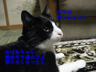 IMG_4184.jpg