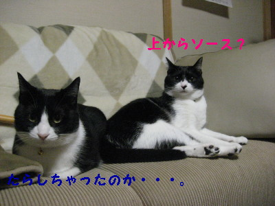 IMG_4191_20081217093535.jpg