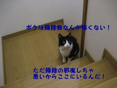 IMG_4227_20081215095016.jpg