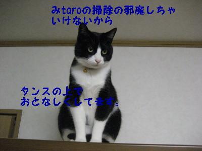 IMG_4239.jpg