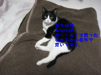 IMG_4307_20081218100819.jpg