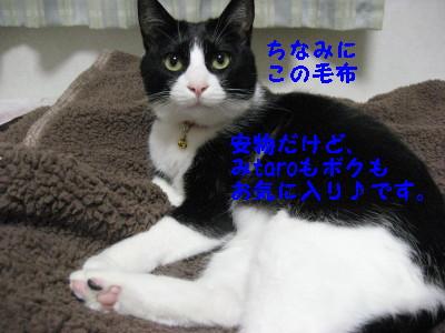 IMG_4308_20081218100824.jpg
