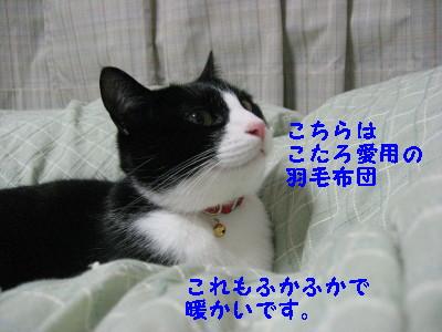 IMG_4314.jpg