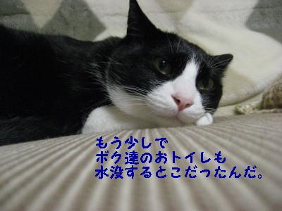 IMG_4430_20081222092518.jpg