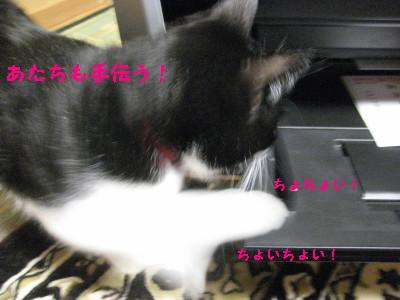IMG_4465.jpg