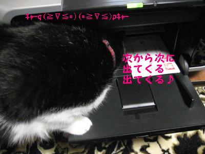 IMG_4467.jpg
