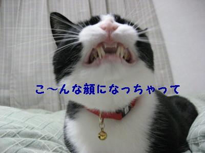 IMG_4526.jpg