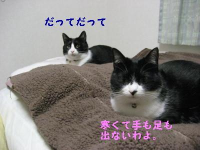IMG_4708.jpg