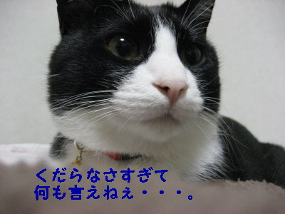 IMG_4773.jpg