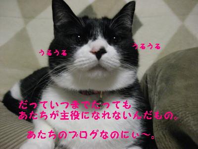 IMG_5121_20090121093956.jpg