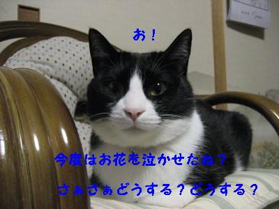 IMG_5128_20090121094003.jpg