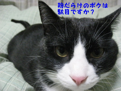 IMG_5142_20090120114456.jpg