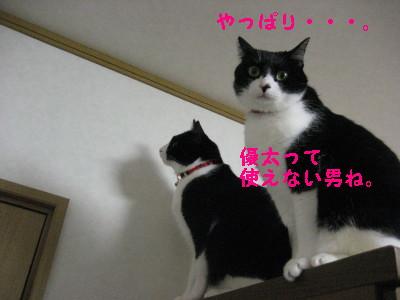 IMG_5345_20090128101637.jpg