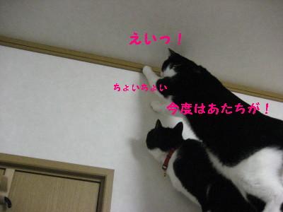 IMG_5358.jpg