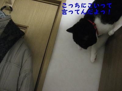 IMG_5371.jpg
