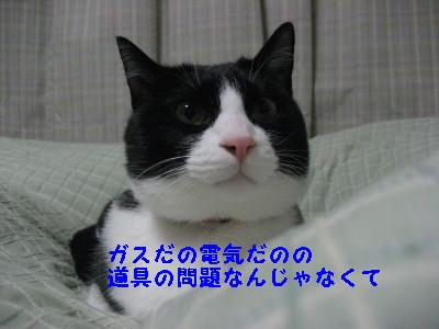 IMG_5422.jpg