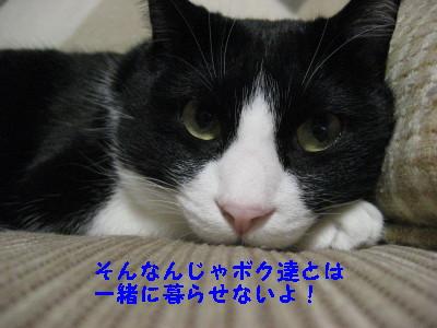 IMG_5463.jpg