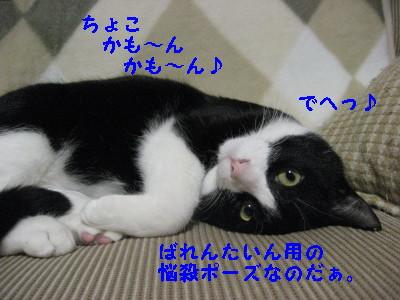IMG_5467.jpg