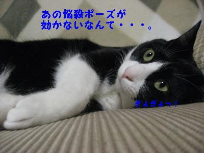 IMG_5470_20090205110546.jpg