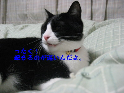 IMG_5515.jpg