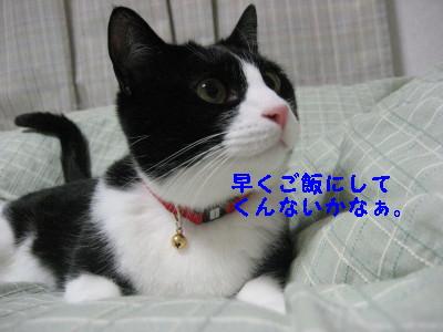 IMG_5520.jpg