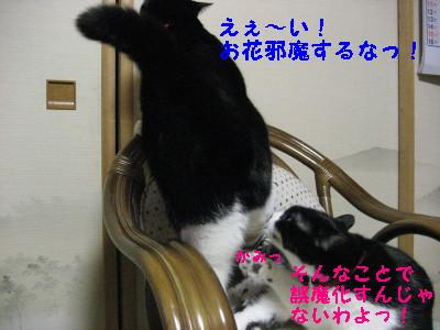 IMG_5542.jpg