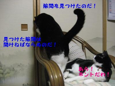 IMG_5545_20090212111947.jpg