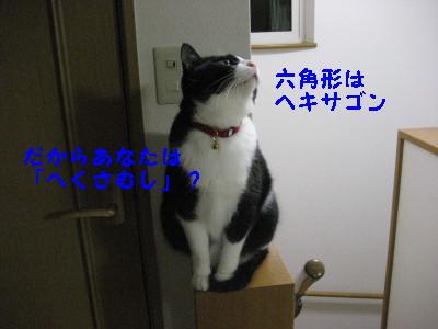 IMG_5649.jpg