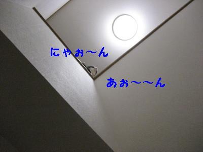 IMG_5666_20090223152056.jpg