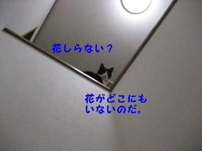 IMG_5668_20090223152102.jpg